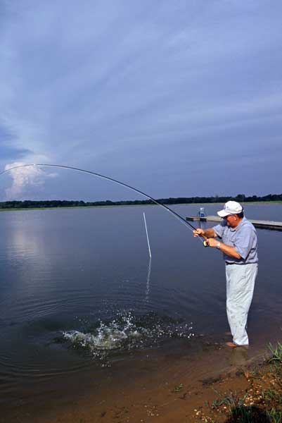 Russell Thornberry landing a large grass carp on a fly.