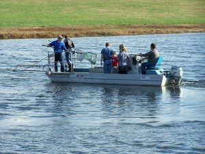 Lake Surveys and Electrofishing