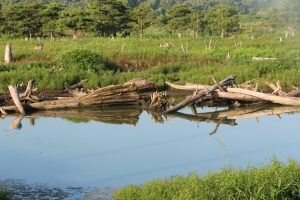 5 Principles of Pond Management: #2 Water