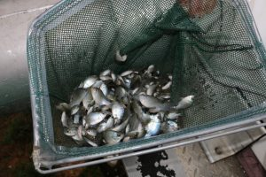 Principles of Pond Management #3: Food Chain
