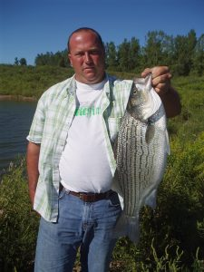 This hybrid striper tipped the scales beyond 8 pounds. They'll grow larger.