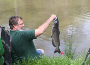 Typical catfish from our catfish pond.