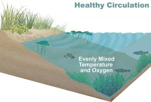 Aeration Benefits Habitat and Food Chain