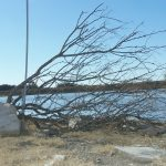 Recycle Christmas Trees For Fish Habitat