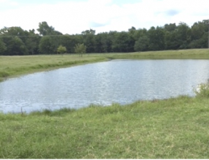 Pond Management