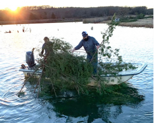 dropping cedar trees into a lake to provide baitfish cover